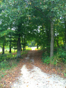for_sale_ironwood_lot_greenville_nc